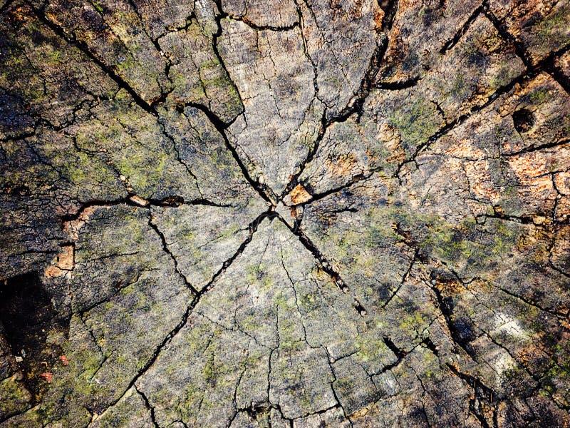 Tekstury stary drzewny drewno, roczny wzrostowy pierścionek obraz stock