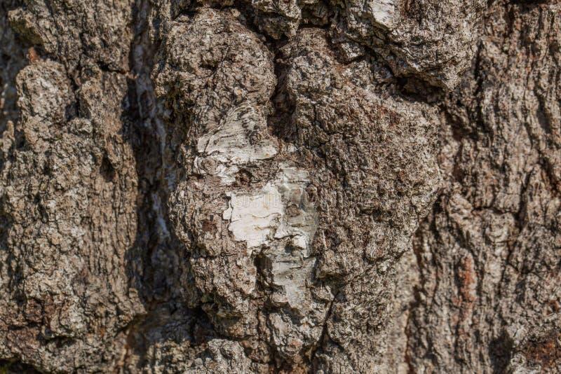 Tekstury tło stara drzewna barkentyna Piękne natur tło tekstury fotografia stock