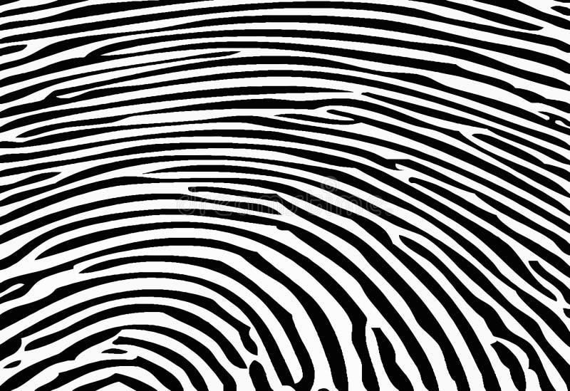tekstury zebra royalty ilustracja