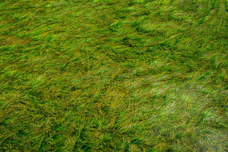 Download Tekstury zielone algi zdjęcie stock. Obraz złożonej z australia - 57663238