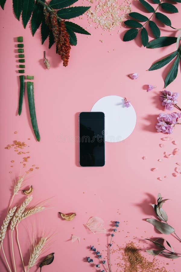 Teléfono con una pantalla clara y forma blanca del círculo en flores en fondo rosado Endecha plana Visi?n superior imagen de archivo