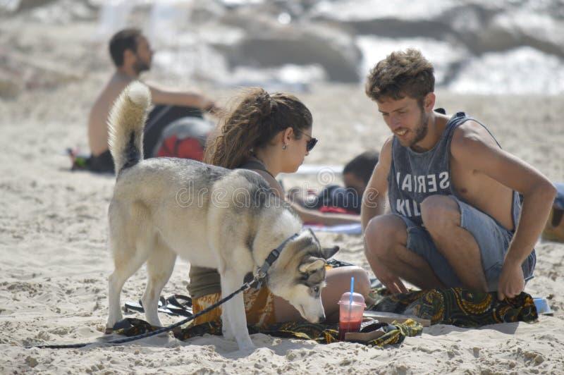 Tel Aviv Israel - April 23, 2017: Lycklig familj med den skrovliga hunden på den Gordon stranden royaltyfri foto