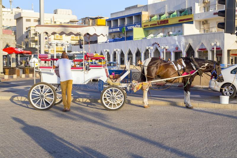 Single horse drawn carriage and the rider in Tel Aviv royalty free stock photography