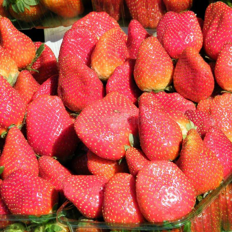 Tel Aviv la fresa en el bazar 2011 fotografía de archivo libre de regalías