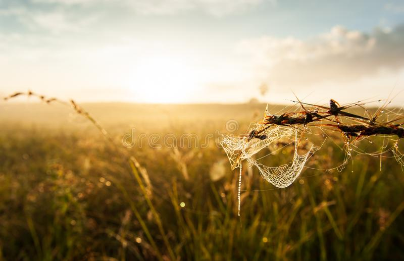 Telaraña con el rocío de la mañana que cuelga en la hierba Sol de oro que brilla en fondos de la telaraña y del prado Mañana que  foto de archivo