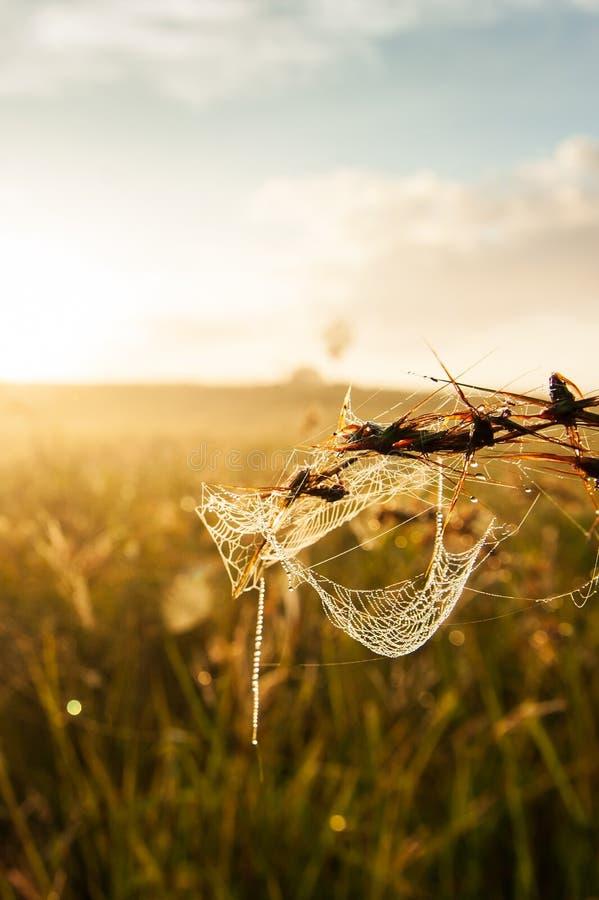Telaraña con el rocío de la mañana que cuelga en la hierba Sol de oro que brilla en fondos de la telaraña y del prado Mañana que  imagenes de archivo