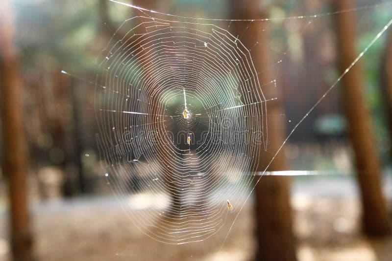 Telaraña en el bosque del otoño foto de archivo libre de regalías