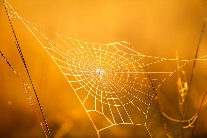 Telaraña mágica con rocío el mañana del invierno imagen de archivo