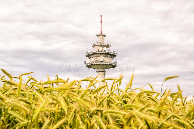 Telecommunication tower behind a field. Telecommunication tower located behind a corn field stock photo