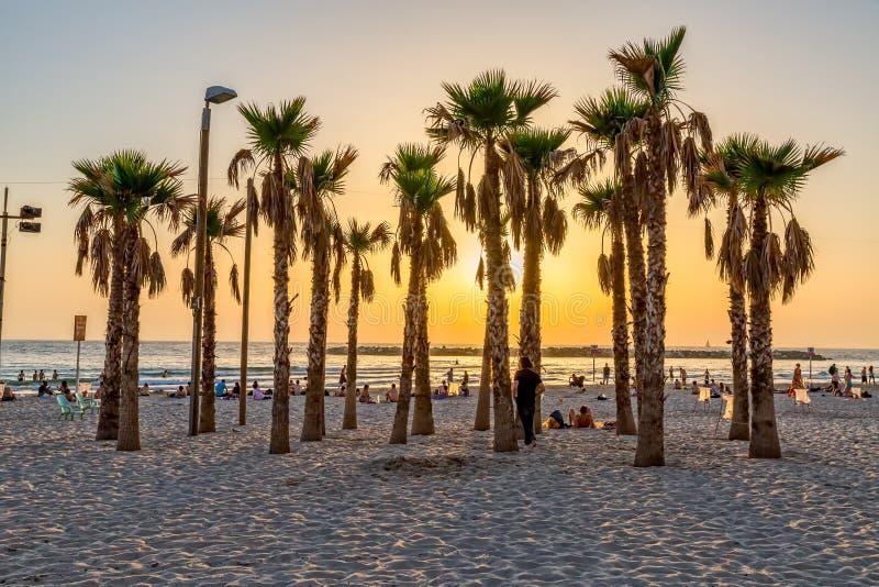Telefone Aviv Sunset imagem de stock