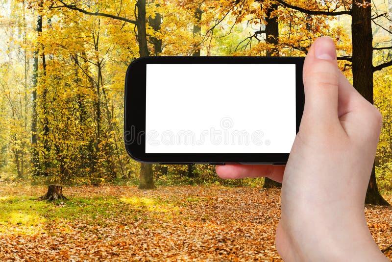 Telefonu i dębu gaj iluminujący słońcem w jesieni obraz stock