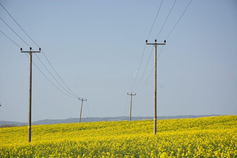 Telegraphenmast auf dem Gebiet des Blühens des gelben Rapssamens stockbilder