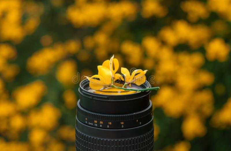 Teleobiettivo nero sui precedenti dei fiori gialli luminosi, lente e fiori, immagine stock libera da diritti