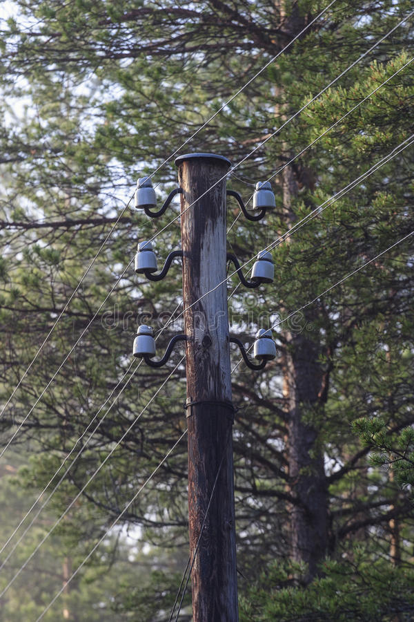 Telephone pole. S in the forest royalty free stock images
