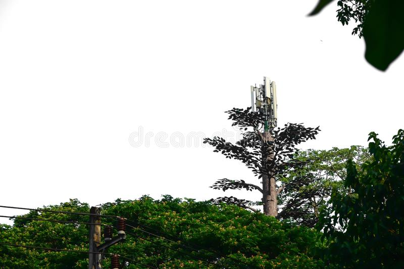 Telephone signal repeater pole that looks like a tree. The telephone signal repeater will be installed near the community to provide good signal reception and stock photos