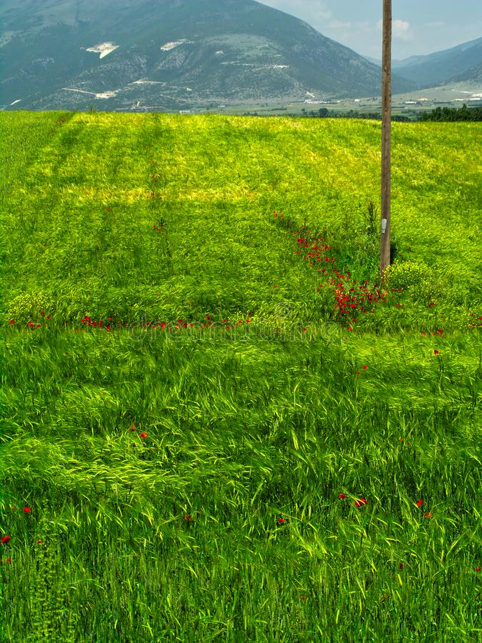 Telephones line wooden post in green field. Telephones line wooden post in green field with red poppy somewhere in Macedonia, Greece stock images