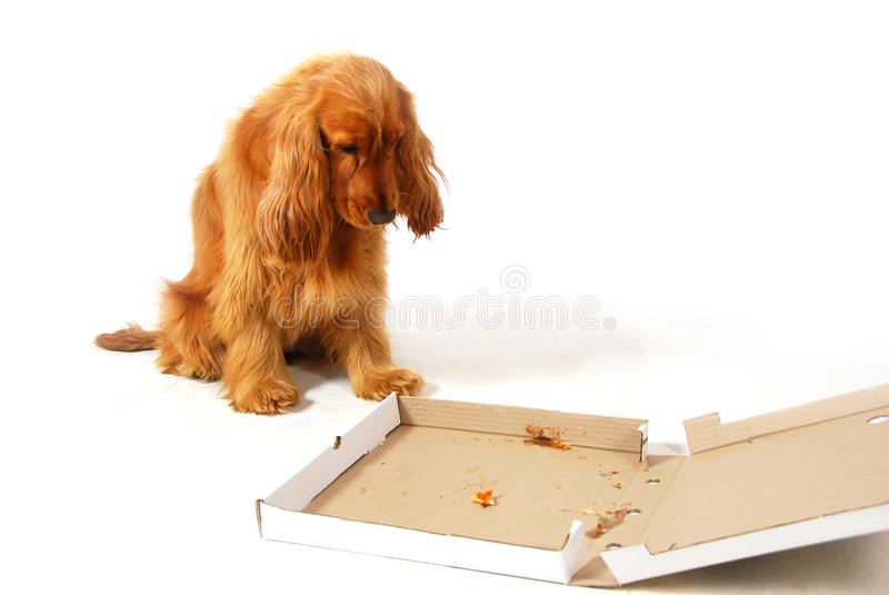 Teleurgesteld puppy stock afbeelding