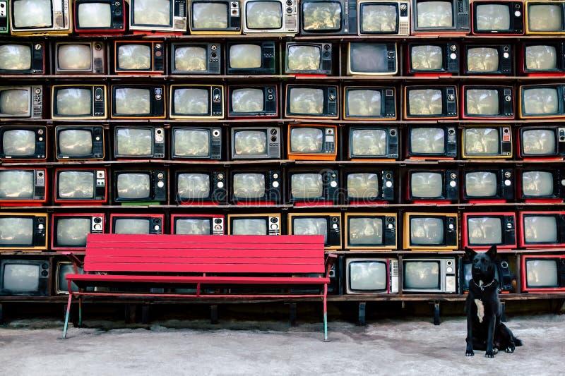 Televisão velha do estilo retro desde 1950, 1960 e anos 70 Com banco vermelho e o cão preto está olhando a câmera fotos de stock
