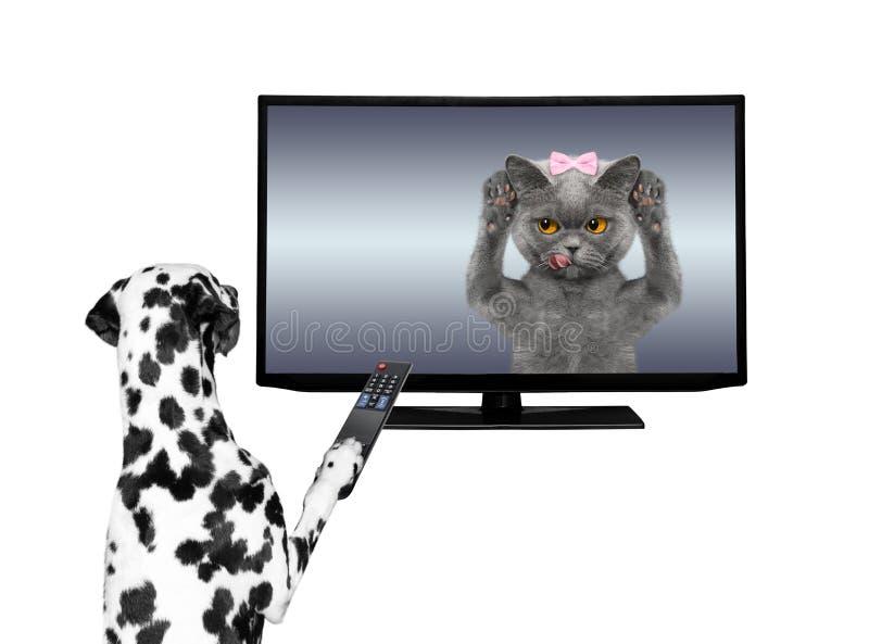 Televisión de observación del perro stock de ilustración