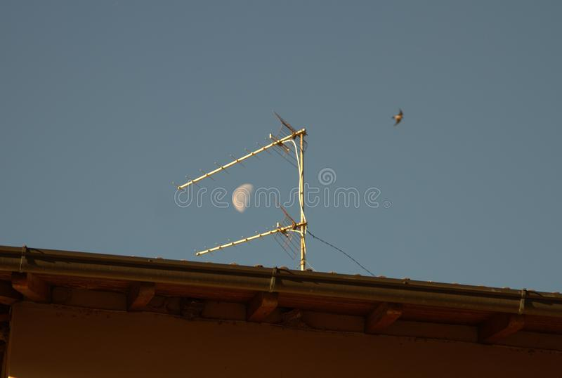 Television antenna in the sky. A television antenna stay in the sky, with a bird and the moon before the day royalty free stock image