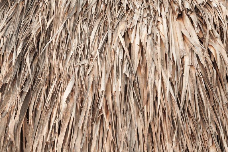 Telhado feito das folhas de palmeira, textura do fundo imagem de stock royalty free