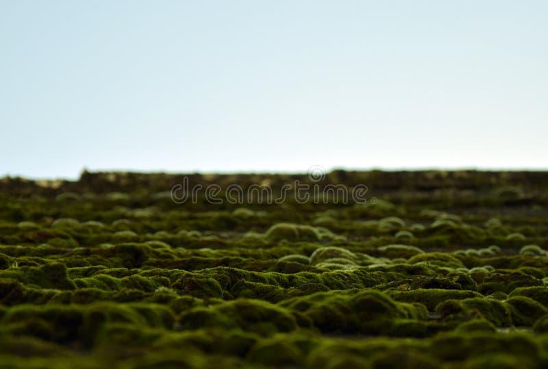 Telhado Moss Landscape no› Å™ice de LitomÄ fotografia de stock