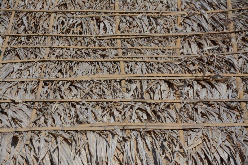 Telhado seco da licença da palma foto de stock