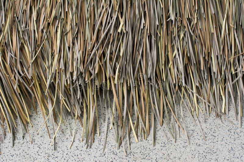 Telhado seco das folhas de palmeira da cabana com fundo do muro de cimento fotos de stock