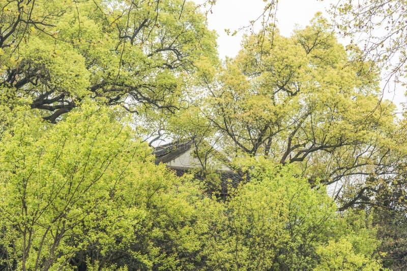 Telhado verde da árvore e da casa foto de stock