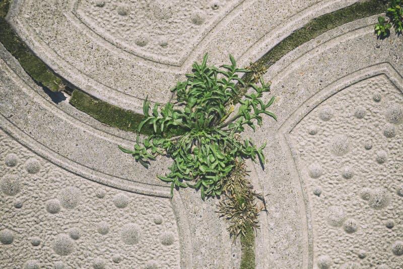 Telhas na grama, papel de parede imagens de stock