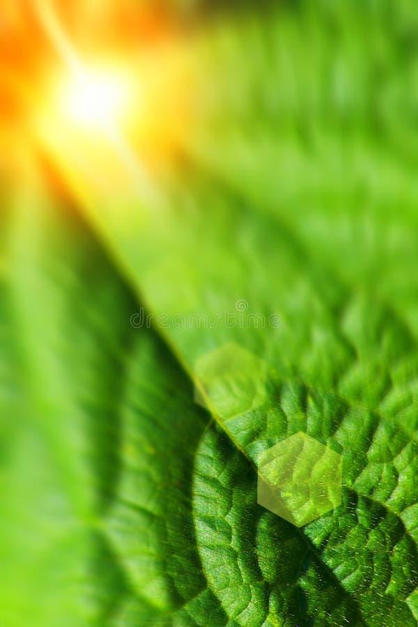 Tema abstrato da natureza do verão imagens de stock