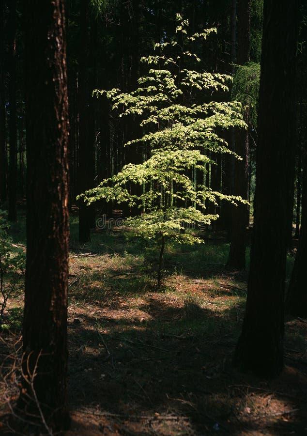 Tema del verano en el bosque imagen de archivo libre de regalías