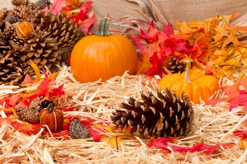 Tema di autunno con il cono del pino immagine stock