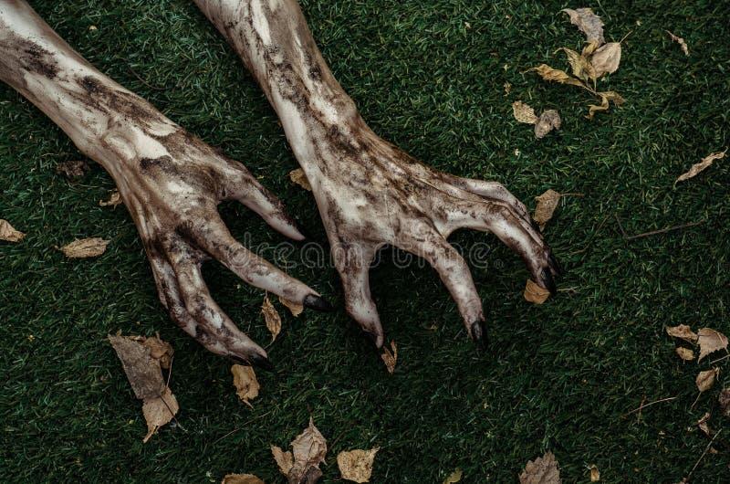 Tema di Halloween e di orrore: Le mani terribili dello zombie sporche con i chiodi neri si trovano sull'erba verde, l'apocalisse  fotografie stock libere da diritti