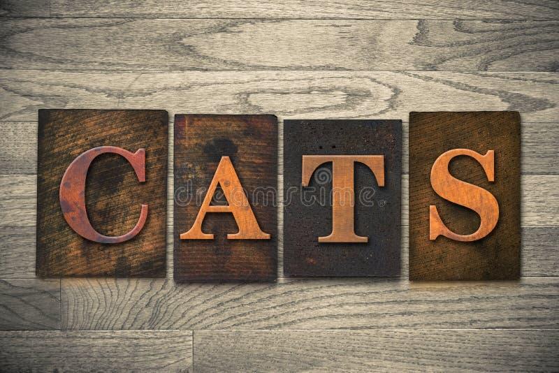 Tema di legno dello scritto tipografico dei gatti immagine stock libera da diritti