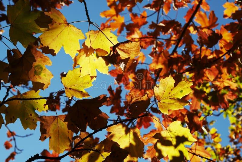 Tema do outono foto de stock
