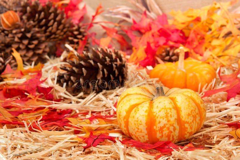 Tema e zucca di autunno fotografia stock