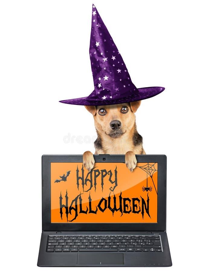 Tema engraçado do papel de parede do caderno do portátil do chapéu da bruxa do cão de Dia das Bruxas isolado foto de stock royalty free