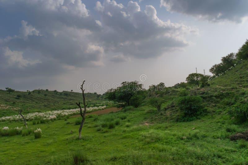 Tema nebuloso com paisagem esverdeado imagens de stock royalty free