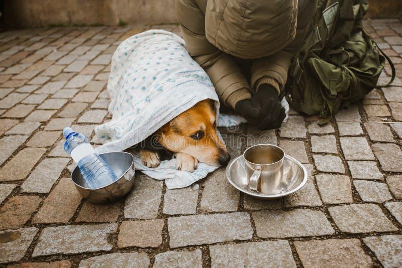 Tema social Un mendigo del mendigo que pide con un perro envuelto en una manta para pedir ayuda en la ciudad de Praga es frío del foto de archivo libre de regalías
