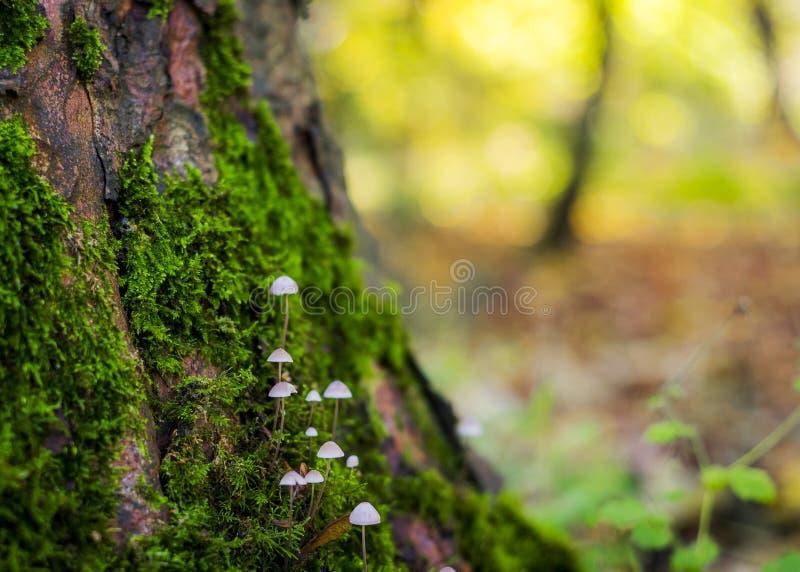 Temat jesienny z grzybami i mchami zdjęcia stock