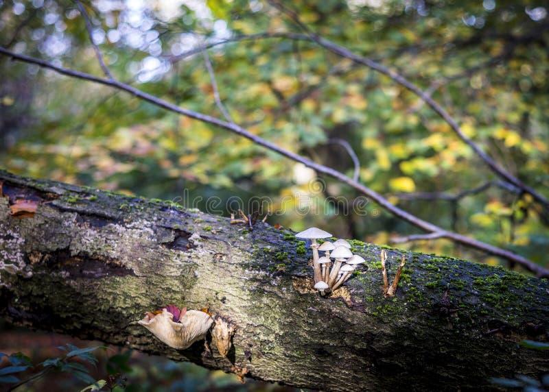 Temat jesienny z grzybami i słonecznym lasem zdjęcia royalty free