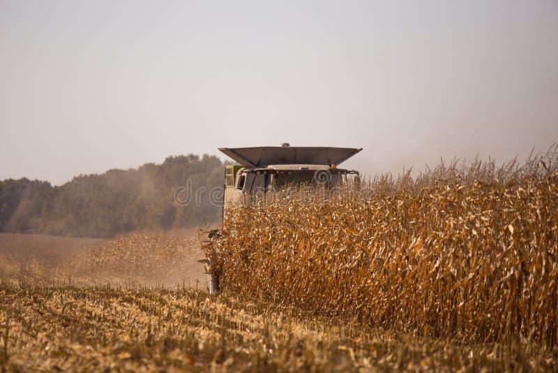Temat Jest rolnictwem Nowo?ytny syndykata ?niwiarz W The Field Wykonuje Zbo?owy Zbiera? Na s?onecznym dniu Przeciw niebieskiemu n obrazy royalty free