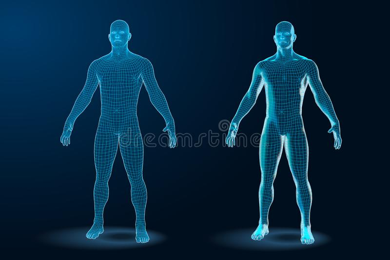 Temlate set of Human Body 3D Polygonal Wireframe Blueprint. Vector Illustration stock photography