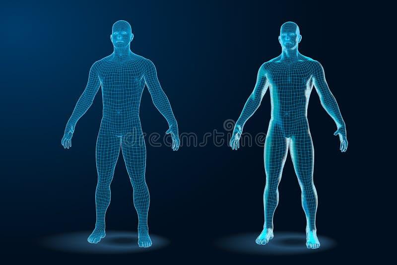 Temlatereeks van Blauwdruk van Menselijk Lichaams 3D Veelhoekige Wireframe Vector illustratie stock fotografie
