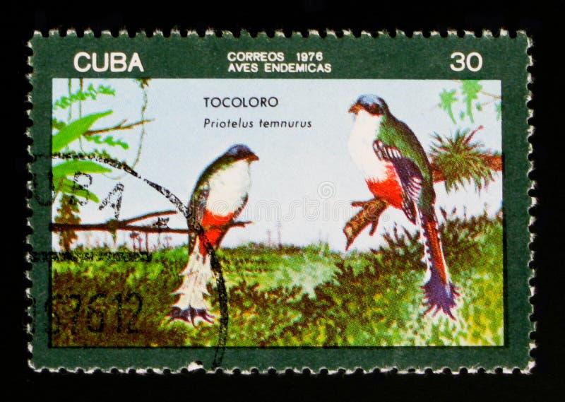 Temnurus Kubaner Trogon Priotelus, circa 1976 lizenzfreies stockfoto