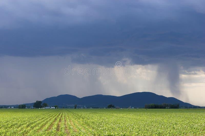 Tempête au-dessus de zone de maïs image stock