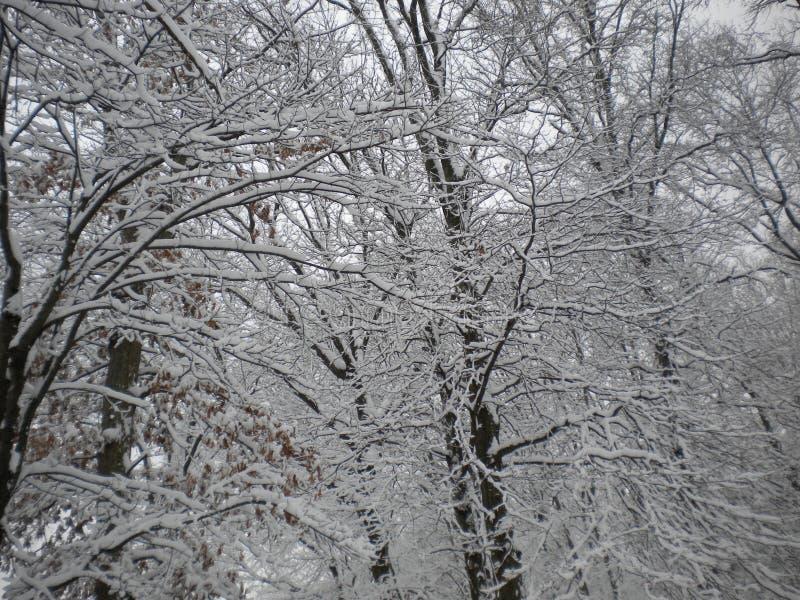 Tempête de neige de l'hiver image libre de droits