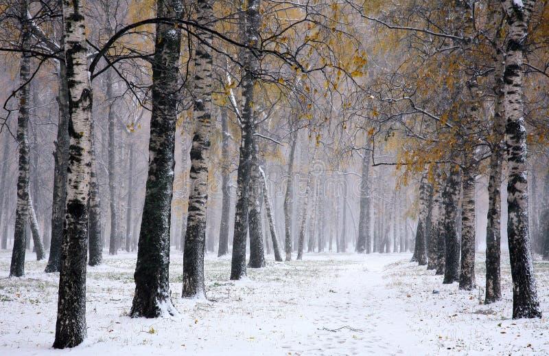 Tempête de neige en automne d'or photos stock