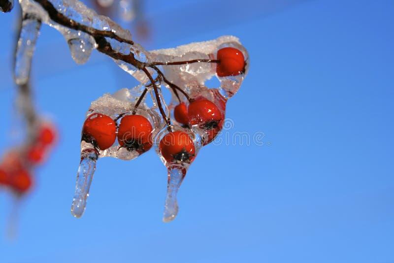Tempête de neige et de glace photographie stock libre de droits
